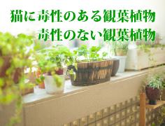 猫に毒性のある観葉植物・毒性のない観葉植物