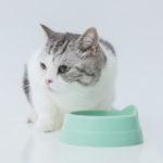 猫が食べ残したキャットフードは時間を空けてから片付けるのがおすすめ